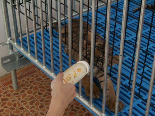 me-feeding-a-cub.jpg