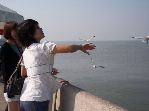 mom-feeding-seagulls-smaller.jpg
