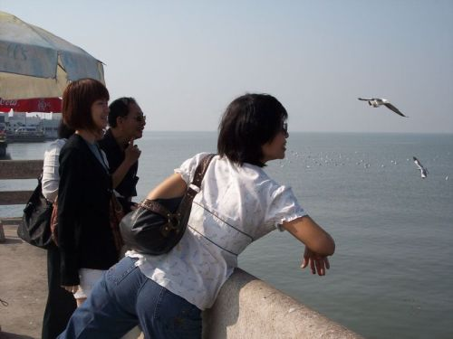 moms-failure-at-feeding-seagulls-lol-smaller.jpg
