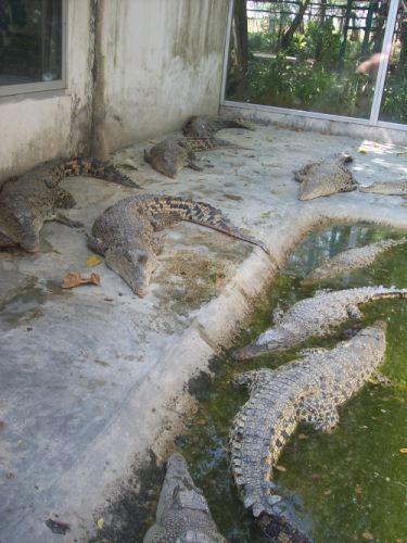 more-crocs.jpg